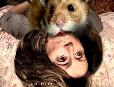 Hamsters abuse Pelosi