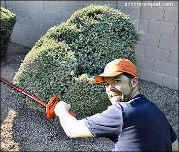 White guy ruins my shrub