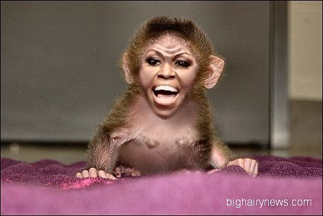 Genetically modified monkey