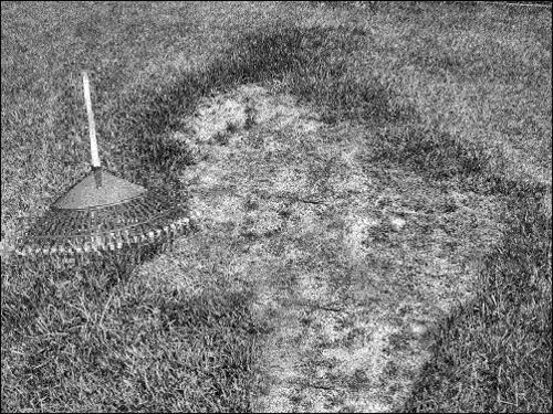 Sissy dead grass spot