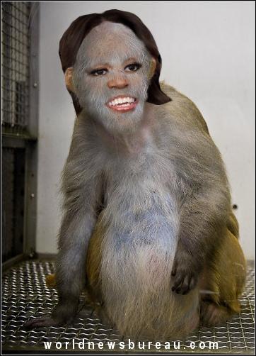 Animal human hybrid