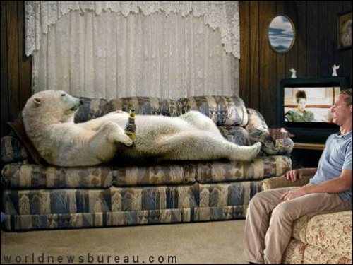 Polar bear in living room