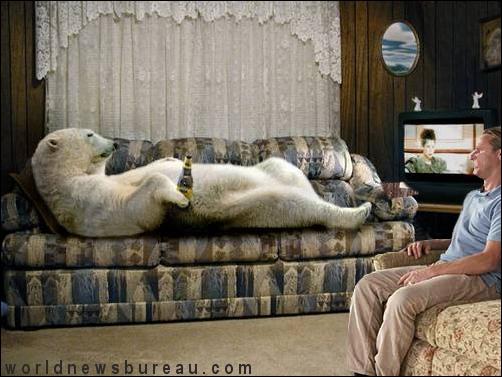 Polar bear in living room