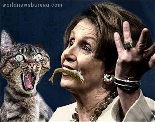 Pelosi and cat