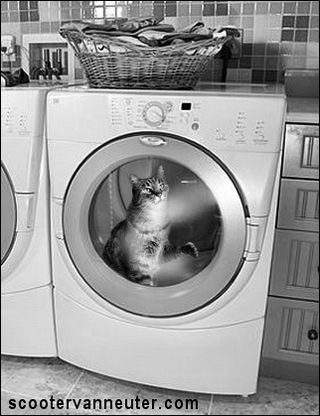 Mr Jangles In the dryer