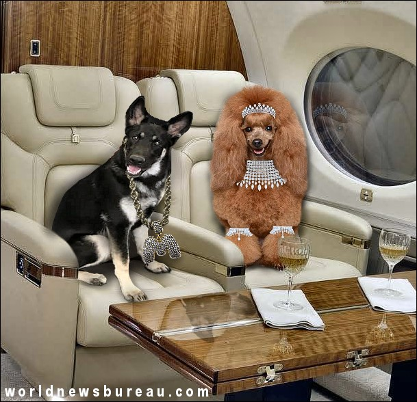 Joe Bidens Dog Major